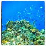 indonesia_pra2012_26