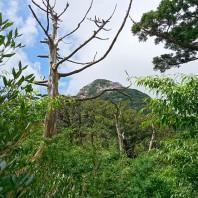 01屋久島風景